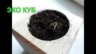 видео Экокуб