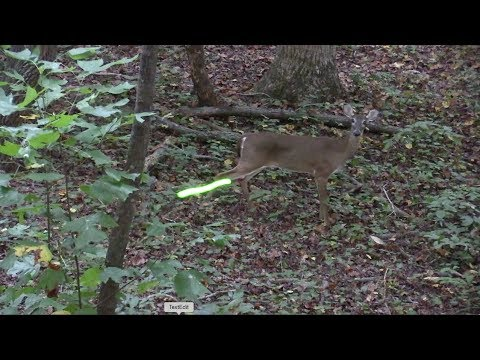 Deer Hunting North Carolina | Chapter 7.1 -