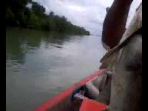 Pulau Ketam Mancing Ikan Kurau