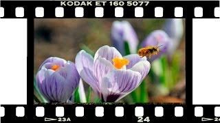С Праздником, дорогие женщины!  Эти Цветы для Вас !(Ранние весенние цветы + разные и очень краствые композиции из цветов., 2015-03-08T23:46:48.000Z)
