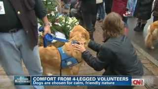 Golden Retriever Comfort Dogs Visit Grieving Families After School Massacre