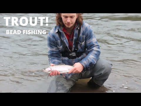 Your Local Oregon Angler ( Day 15 ) Sandy River Trout