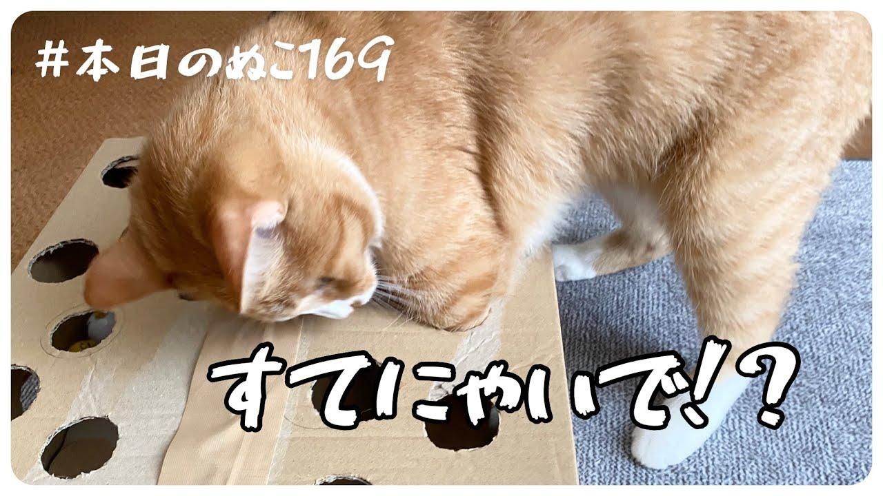本日のぬこ169【猫のおもちゃ捨て時がわからない】