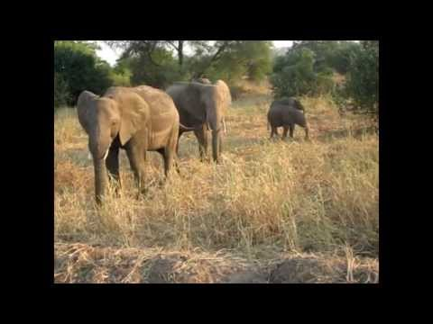 Adventure Lifestyles: Travel: Get Paid to Go On an African Safari