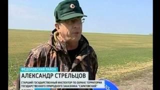 Дрофа на грани исчезновения(Адрес нашего сайта gtrk-saratov.ru гтрк-саратов.рф twitter https://twitter.com/gtrk_saratov facebook https://www.facebook.com/64gtrk vk http://vk.com/sargtrk ..., 2014-04-25T08:45:29.000Z)
