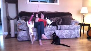 Kittens love the wand teaser!