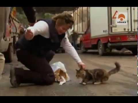 El mundo de los Gatos (Documental Odisea)