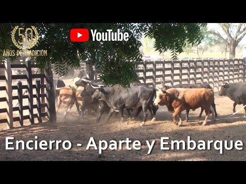 ENCIERRO APARTE Y EMBARQUE DE LOS TOROS DE ARTURO BERRIO