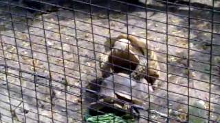 zoo porn - turtle edition