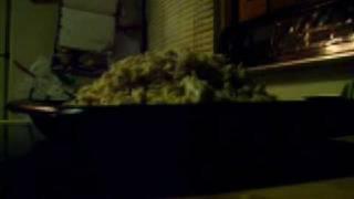 Quick Chick Spahghetti