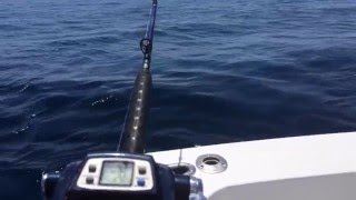 Watch Alabama Gulf Of Mexico video