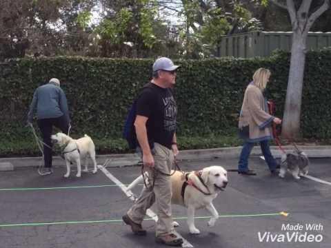 VIP Dog Teams Angie🐾