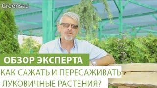 Как сажать и пересаживать луковичные растения?(В этом видео наш эксперт расскажет, как сажать и пересаживать луковичные растения. Купить луковичные можно..., 2015-09-07T13:31:16.000Z)