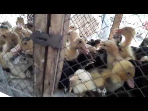 VISIT OF SUNDAY BIRDS MARKET LAHORE SHALIMAR GARDEN