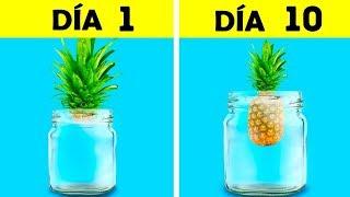 30 IDEAS PERFECTAS PARA TU PEQUEÑO JARDÍN