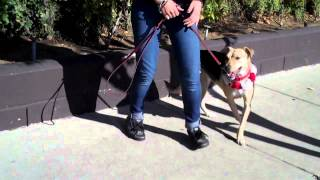 K9s Only - Dog Training Los Angeles