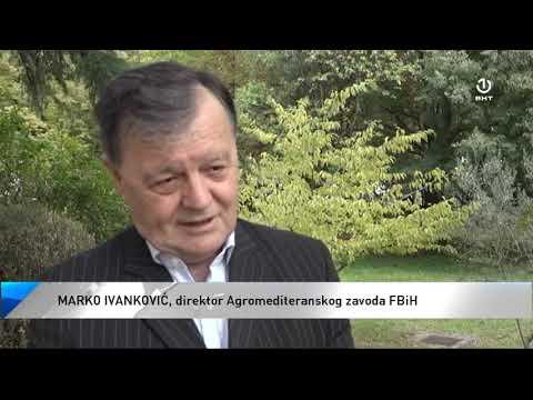 U Hercegovini trenutno 50 hektara nasada smokve
