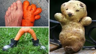 Crazy fruits and vegetables. Are plants evolving?