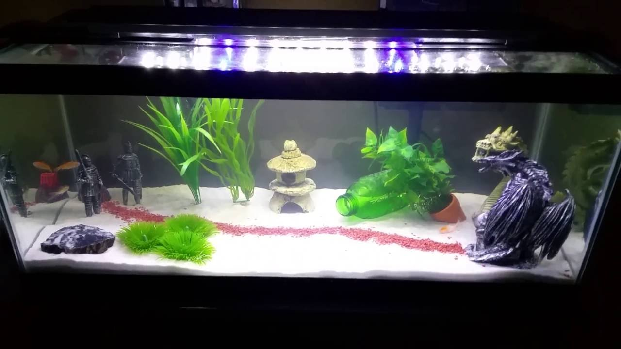 20 gallon long fish tank initial setup youtube for 20 gallon long fish tank