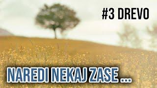 MEDITACIJA 3# Drevo