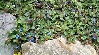 Колибри или бабочка бражник)