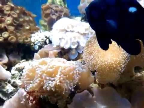 Acquario marino di barriera tropicale 300 litri youtube for Acquario marino 300 litri prezzo