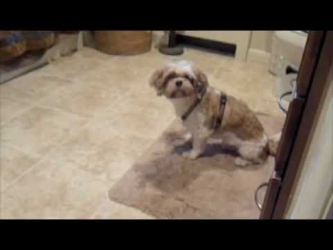 Cesar Millan Stop Dog Chasing Cat