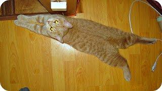 Смешные Кошки 2016! (#8) Веселая Видео Подборка! Смешные Животные 2016 /