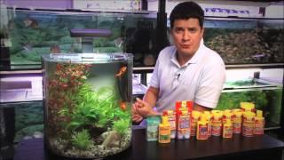 Что нужно знать, чтобы запустить аквариум. Часть 1