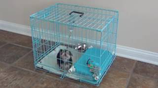 How do I potty train a small breed puppy Quick and simple so
