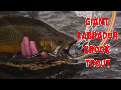 Fly Fishing Labrador For Giant Brook Trout At Three Rivers Lodge