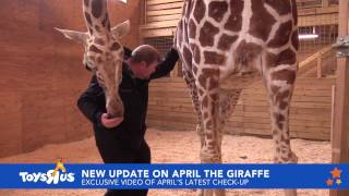 connectYoutube - April the Giraffe sees Dr. Tim