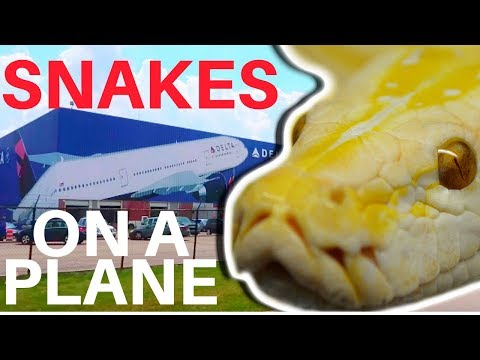 GIANT SNAKE ON A PLANE!!!! Brian Barczyk