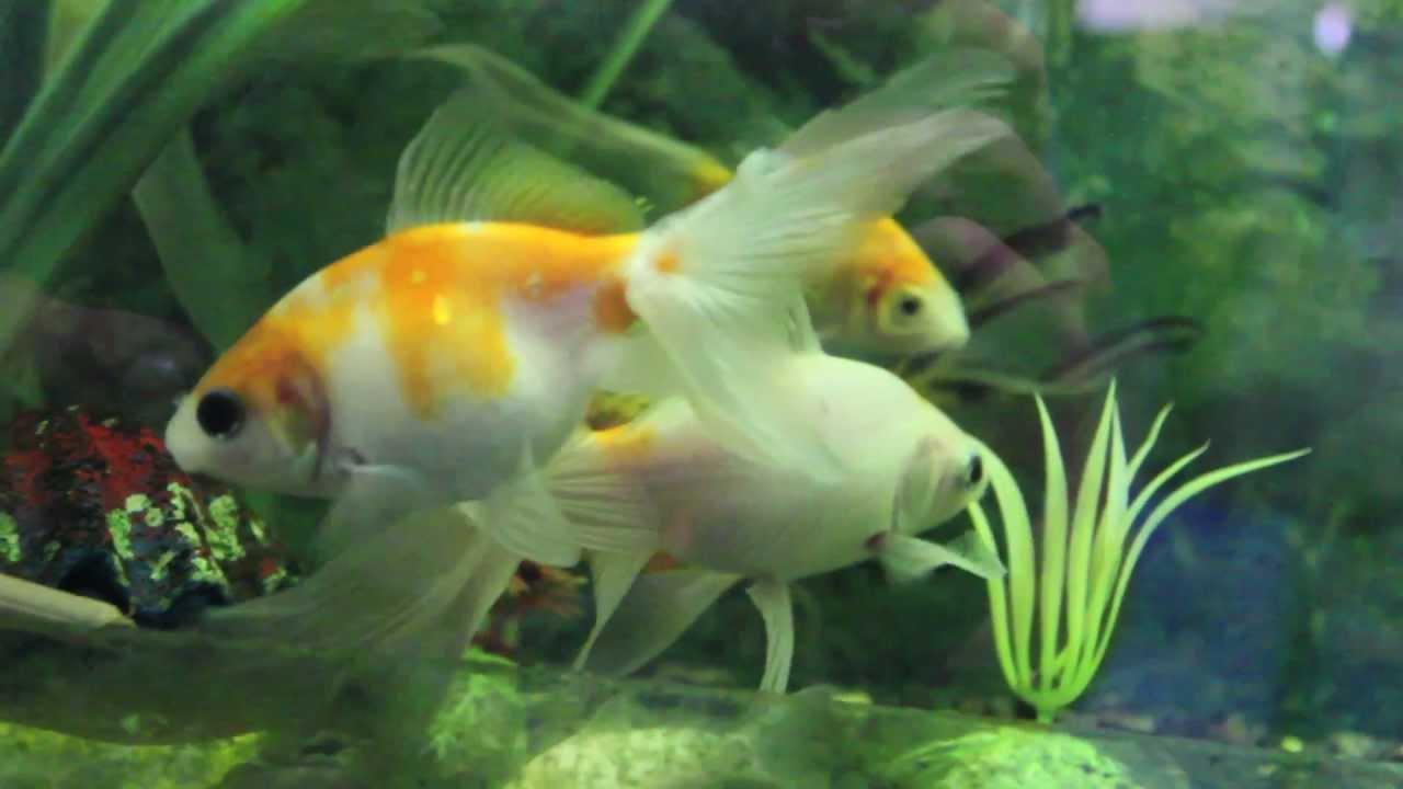 La vida de los peces youtube for Como se cultivan los peces