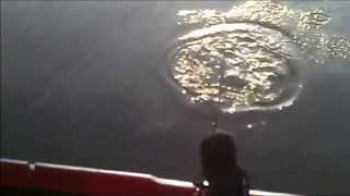 Memancing Di Dermaga - Strike Ikan Terkulu Besar