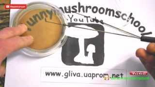 Мицелий грибов  Как сделать лабораторную петлю, урок от funnymushroomschool 1