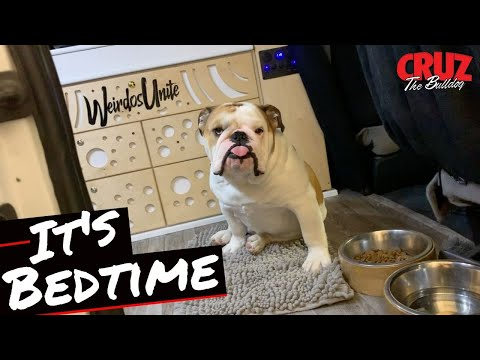 He Is A Total Maniac Every Night Before Bed | Cruz The Bulldog