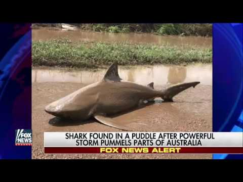 Shark found in puddle after powerful storm pummels Australia