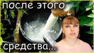 Фитофтороз томатов - не приговор!!! Обработка помидоров от фитофторы!