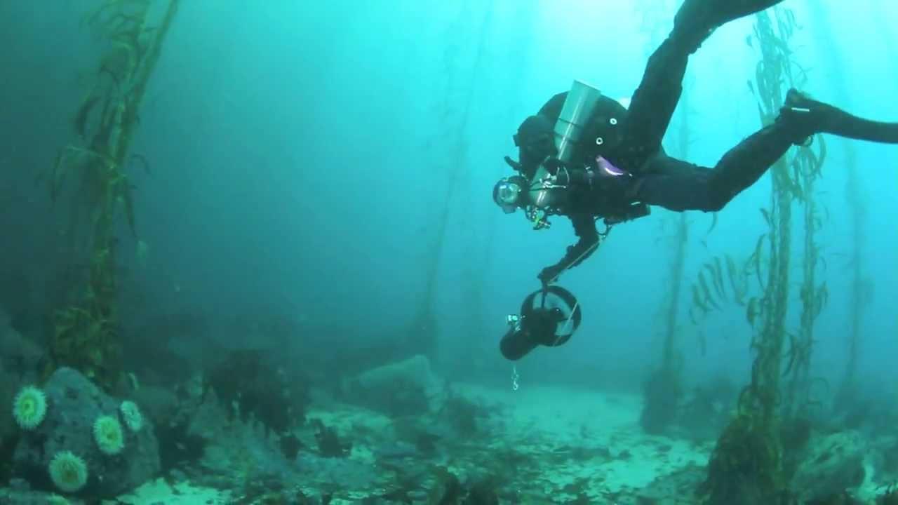 Amazing Underwater 3d Dive Map Dedicated At Point Lobos California Diver Magazine
