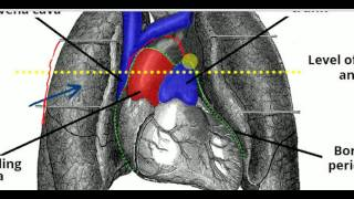 Neonatal Respiration-RDS,TTN,MAS.