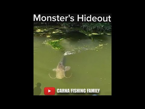 😱 Monster Fish's Hideout 🎣 #fishing #bigfish #silure #catfish #shorts