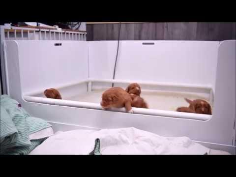 Deseree's Puppies Present: The Great Escape