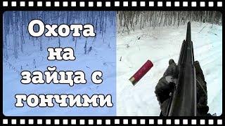 Охота на зайца с русской гончей. Первый заяц с гона 2016