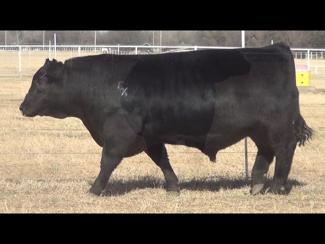 Express Ranches Lot 14