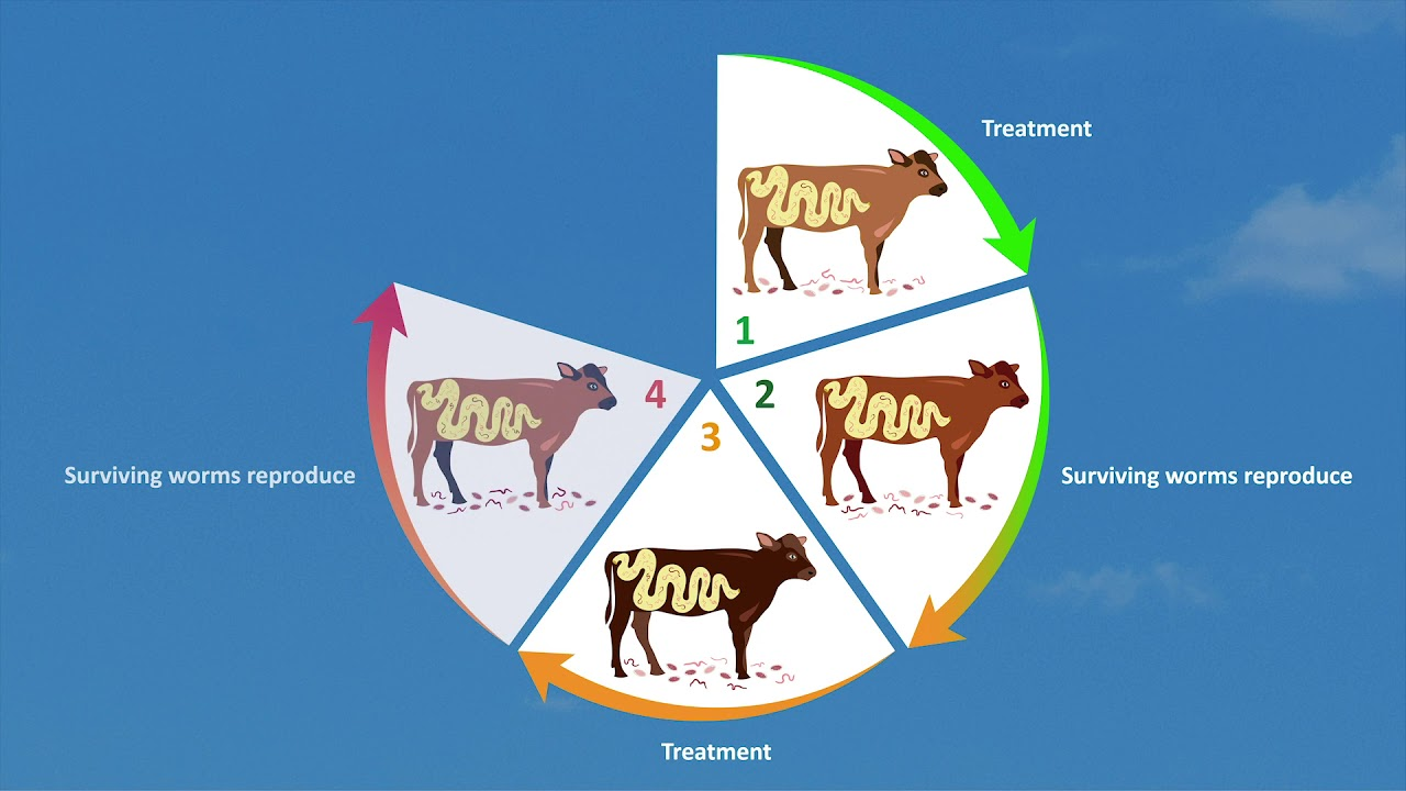 What is Anthelmintic Resistance