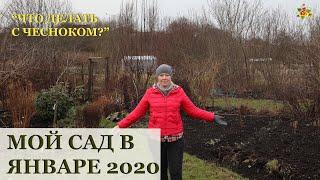МОЙ САД-ОГОРОД В ЯНВАРЕ 2020 / УРОЖАЙ В ЯНВАРЕ