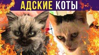 Приколы с котами. АДСКИЕ КОТЫ | Мемозг #233