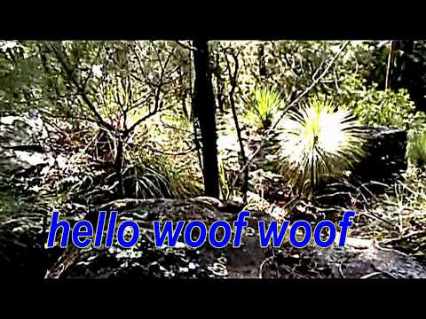 7.45 sec look hello woof woof yowie says to my dog encounter australia yowie