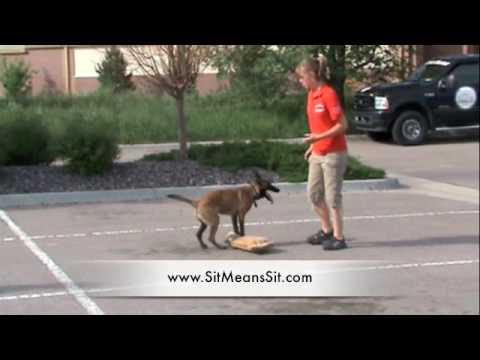 dog-training---awesome-14-yr.-old-dog-trainer